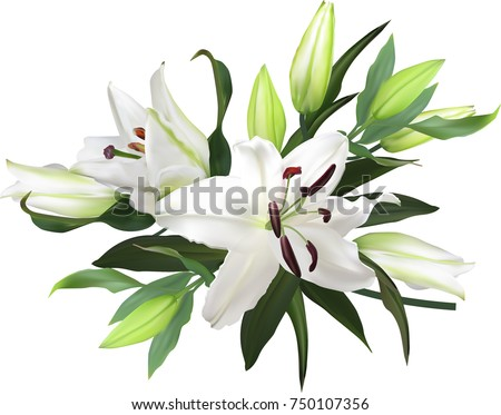 illustration with light lily flowers on white background