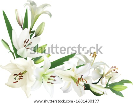 illustration with lily flowers corner isolated on white background Foto stock ©