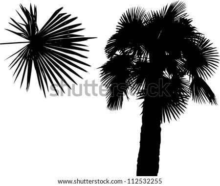 illustration with palm silhouette isolated on white background