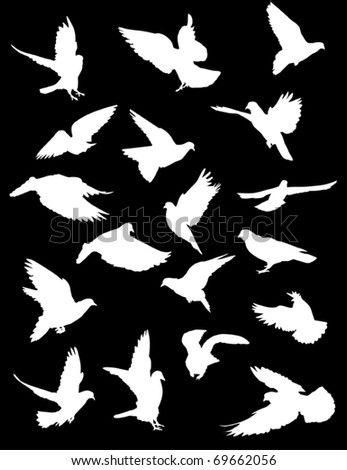 illustration with pigeon silhouettes isolated on black background