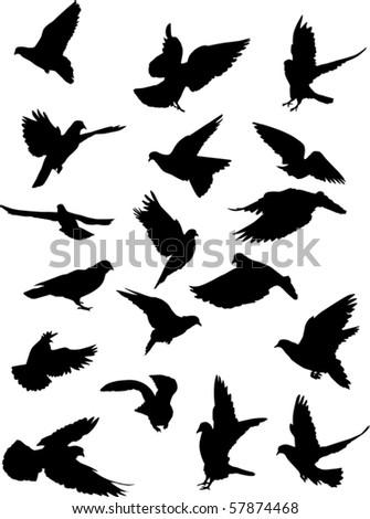 illustration with pigeon