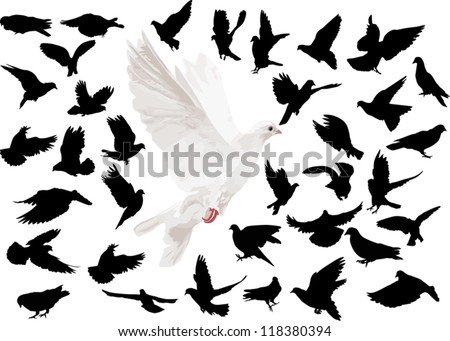 illustration with pigeons isolated on white background
