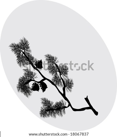 illustration with pine tree branch silhouette isolated on grey