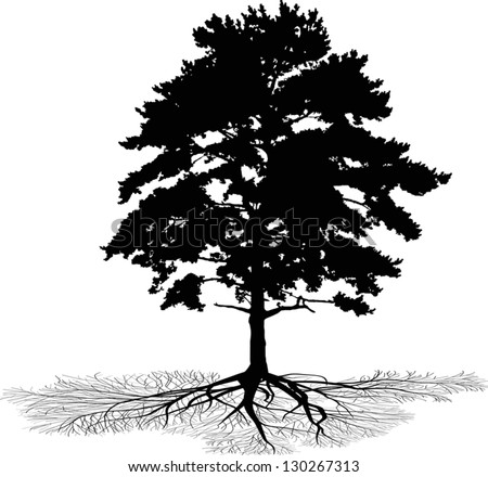 Illustration With Pine Tree Silhouette Isolated On White Background ...