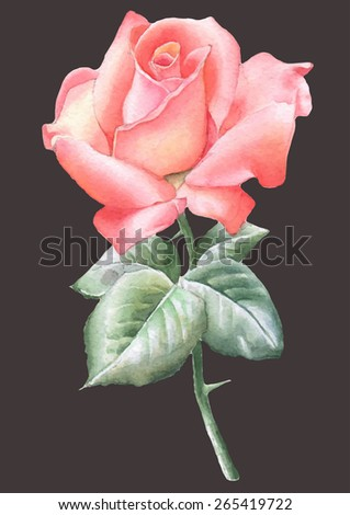 illustration with red rose