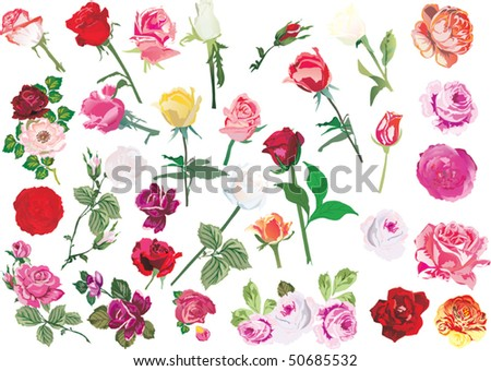 rose flowers images. rose flowers collection