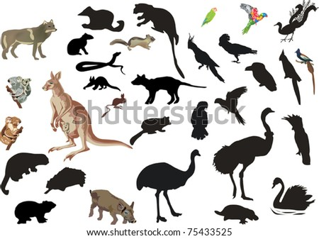 illustration with set of australian animals and birds isolated on white background - stock vector