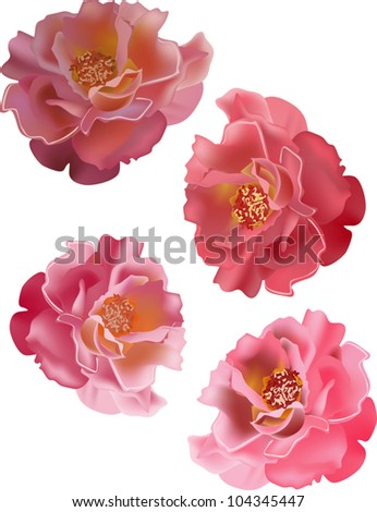 illustration with set of rose flowers isolated on white background