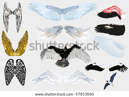 illustration with set of wings isolated on grey background