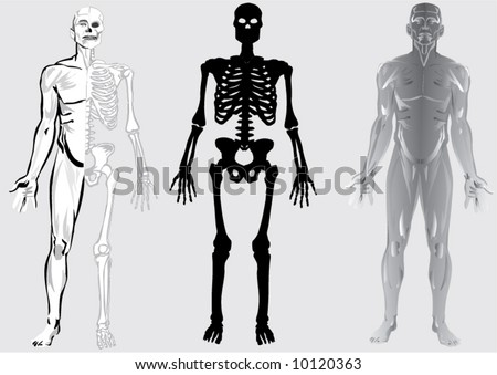 human skeleton cartoon. of human skeleton
