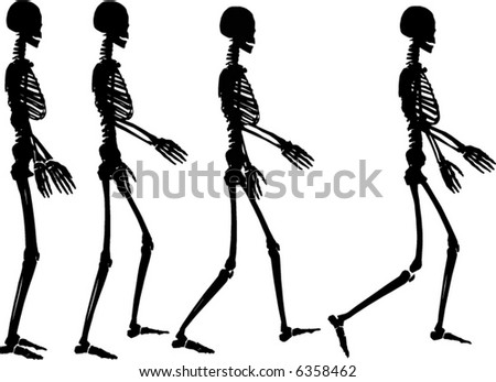 human skeleton drawing. of human skeleton
