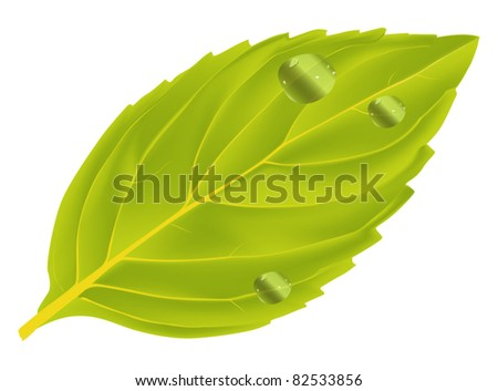 illustration with single mint leaf isolated on white background