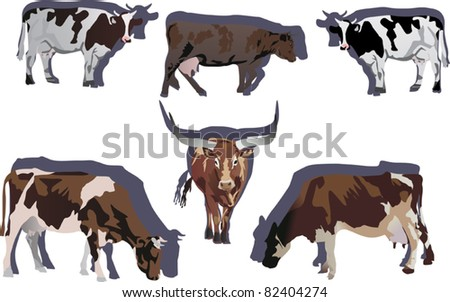 illustration with six color bull and cow on white