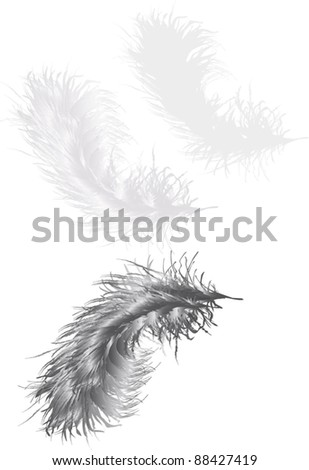 illustration with three grey feathers isolated on white background - stock vector