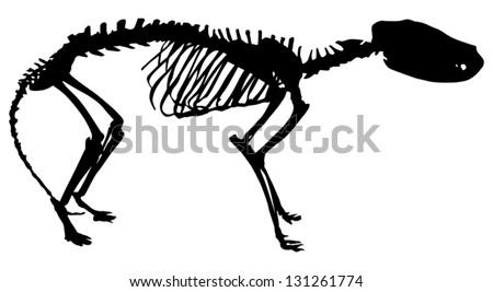 Tiger Skeleton Pictures With Tiger-wolf Skeleton