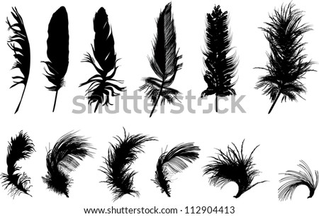 illustration with twelve black feathers isolated on white background