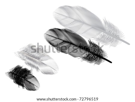 illustration with two grey feathers isolated on white background