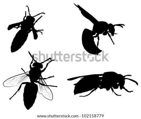 hornet download free vector art stock graphics images