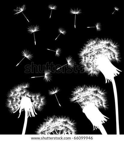 illustration with white dandelions on black background