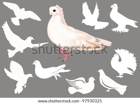 illustration with white pigeon collection isolated on grey background