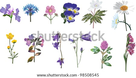 illustration with wild flowers