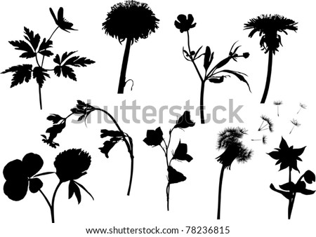 illustration with wild flowers silhouettes isolated on white