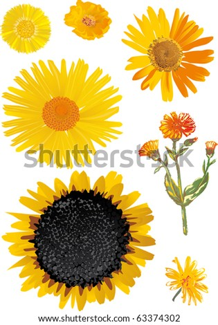 illustration with yellow flowers collection - stock vector
