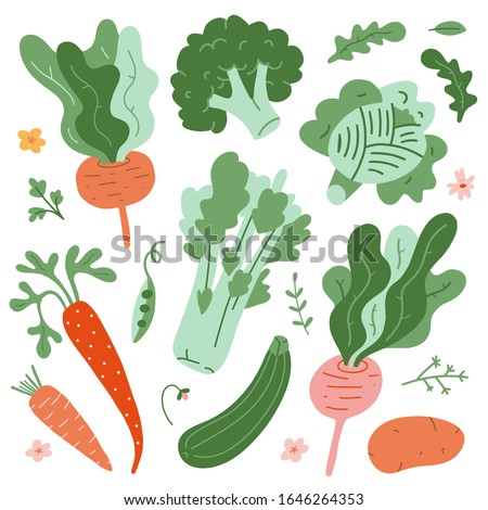 Illustrations of vegetables, green fresh organic ripe veggies, cute hand drawn style, isolated vector drawings, beet root, celery, cabbage and carrot, raw products of vegetable garden,