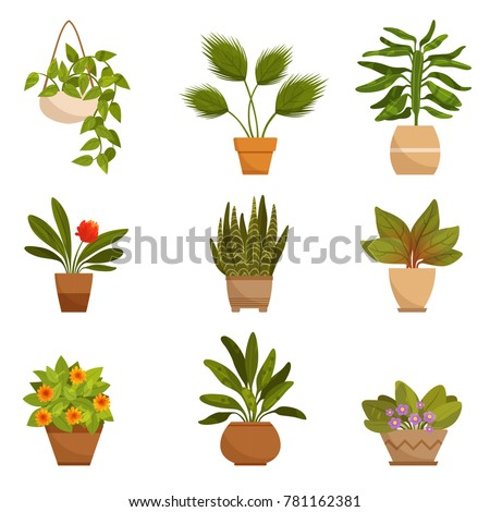 Illustrations set of home decorative plants. Vector pictures isolate on white. Green plant for home, floral flower and houseplant