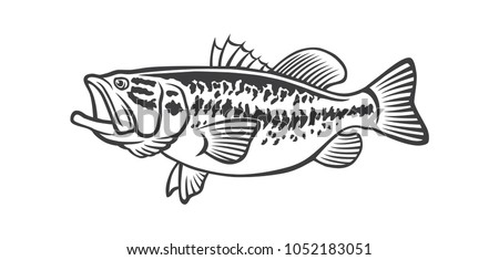 image bass fish