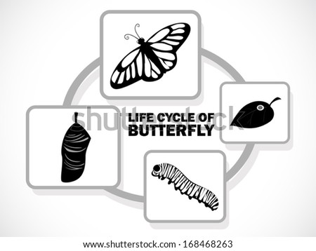 image graphic style of butterfly life cycle isolated on white background