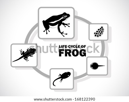 image graphic style of frog life cycle isolated on white background