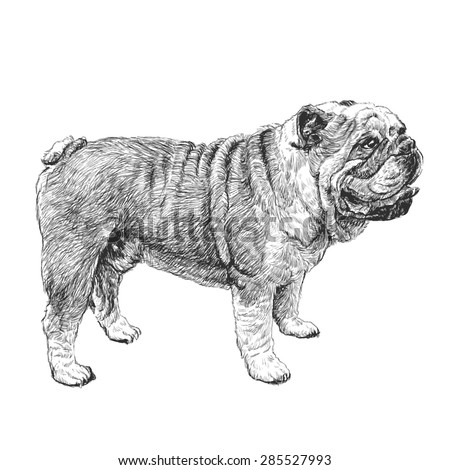 image of bulldog hand drawn...