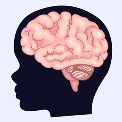 Image of the brain and silhouette of a human profile. Children's brain and fantasy. ASMR triggers.