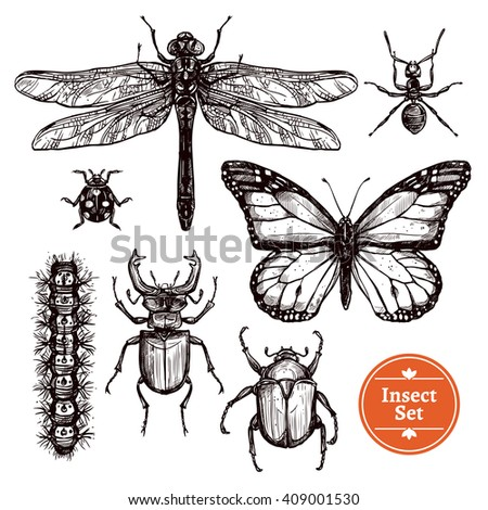 images set of different insects