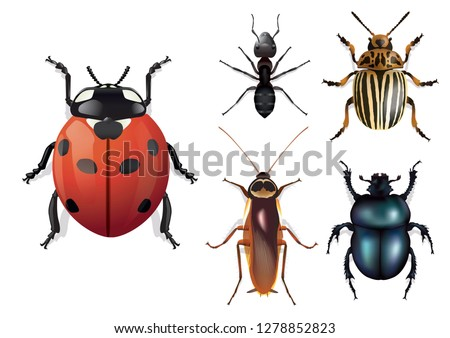 ImpressionNaturalistic insects board, seen from above. With beneficial or harmful insects such as ladybugs, cockroaches, Colorado potato beetles, ant or beetles. Foto stock ©