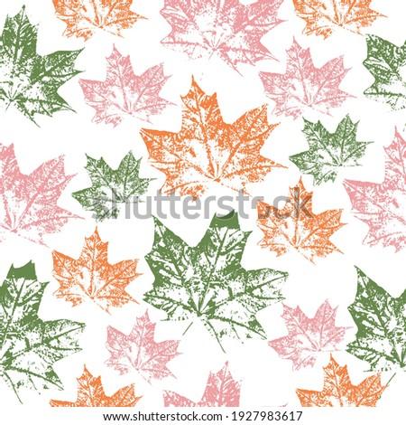 imprint maple leaf  vector