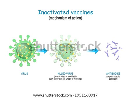 Inactivated vaccines use killed or modified viruses that unable to replicate. mechanism of action to prompt the body to produce antibodies against SARS-CoV-2, and different infectious diseases Stock photo ©