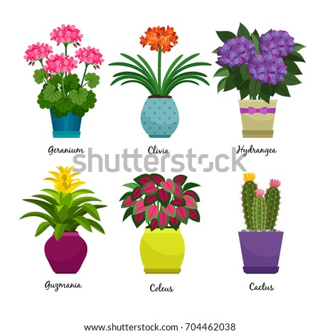 Indoor garden plants and fresh flowers isolated on white background. House growing potted houseplants set for greenhouse design. Geranium and Hydrangea, Coleus and Cactus, vector illustration