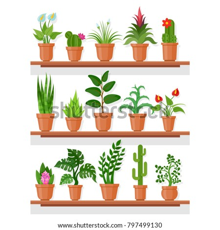 Indoor plants on shelf. Indoor plant garden display at house or apartment, office eco decor. Vector flat style cartoon plants illustration isolated on white background