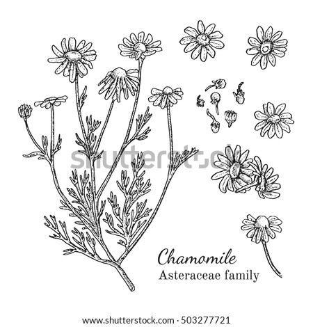 265029986 Shutterstock Vector Set Of Ink Hand Drawn Medical