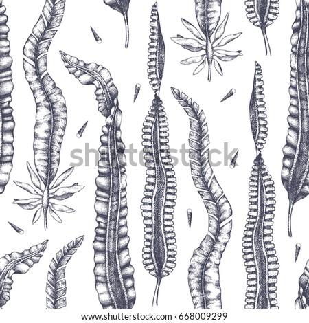ink hand drawn laminaria sketch