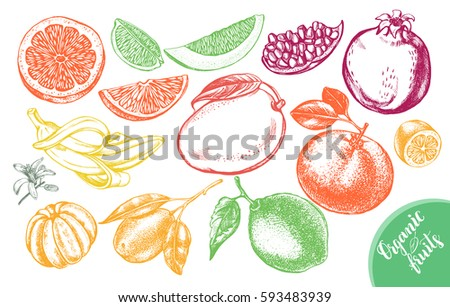 Ink hand drawn set of different kinds of citrus and tropical fruits. Food elements collection for design, Vector illustration.