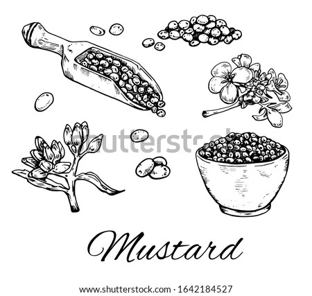 Ink Mustard seeds hand drawn set. Retro botanical line art. Vintage raw dijon mustard, flowers, seeds in dip bowl. Herbal vector illustration isolated on white background Сток-фото ©