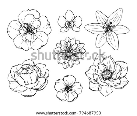 Flower sketch vectors download free vector art stock graphics ink pencil black and white flower sketchansparent background hand drawn nature mightylinksfo