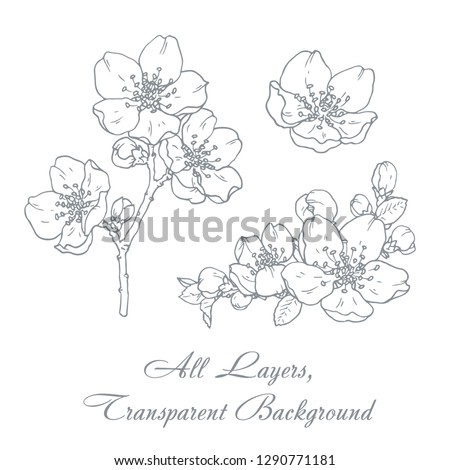 Ink, pencil,  the leaves and flowers of apple isolate. Line art transparent background. Hand drawn nature painting. Freehand sketching illustration.  #1290771181