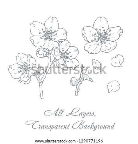 Ink, pencil,  the leaves and flowers of apple isolate. Line art transparent background. Hand drawn nature painting. Freehand sketching illustration.  #1290771196