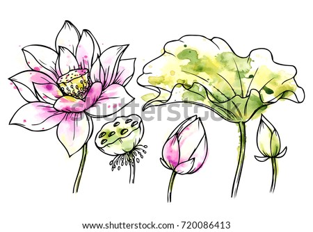 Ink, pencil, watercolor flower sketch.Transparent background. Hand drawn nature painting. Freehand sketching illustration. Ink wash painting