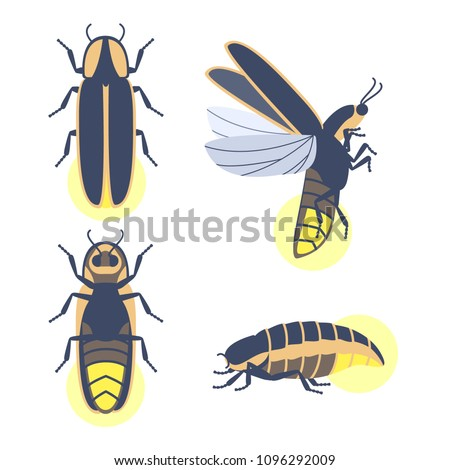 insect beetle firefly vector
