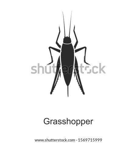 insect grasshopper vector icon